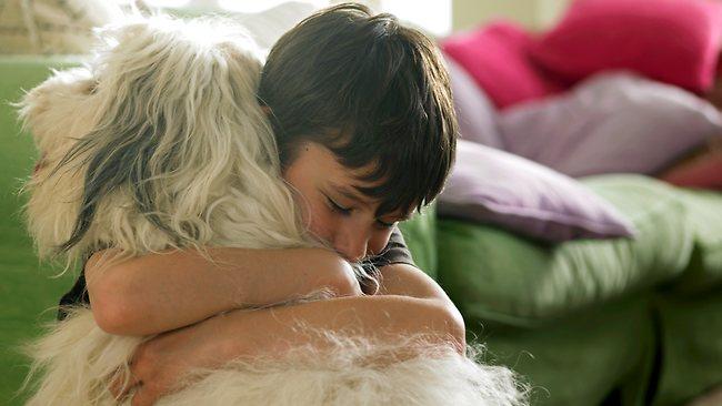 Kutyaszőr allergia ellen - a kép csak illusztráció
